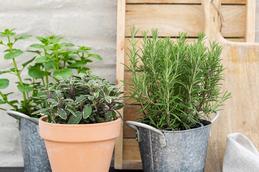 Sådan dyrker du perfekte krydderurter hos Plantorama